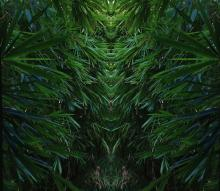 Миниатюра изображения для jungle1.JPG