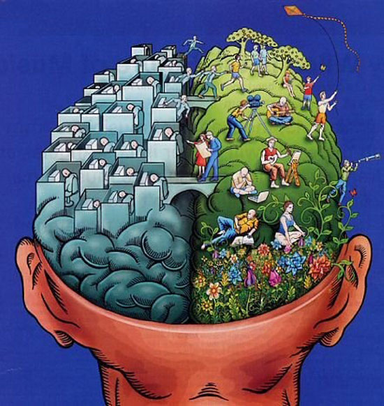 правая и левая половина мозга